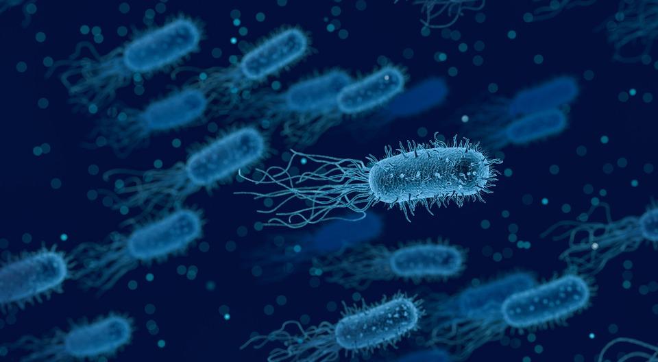 Уничтожение бактерий, инфекций, плесени, грибка