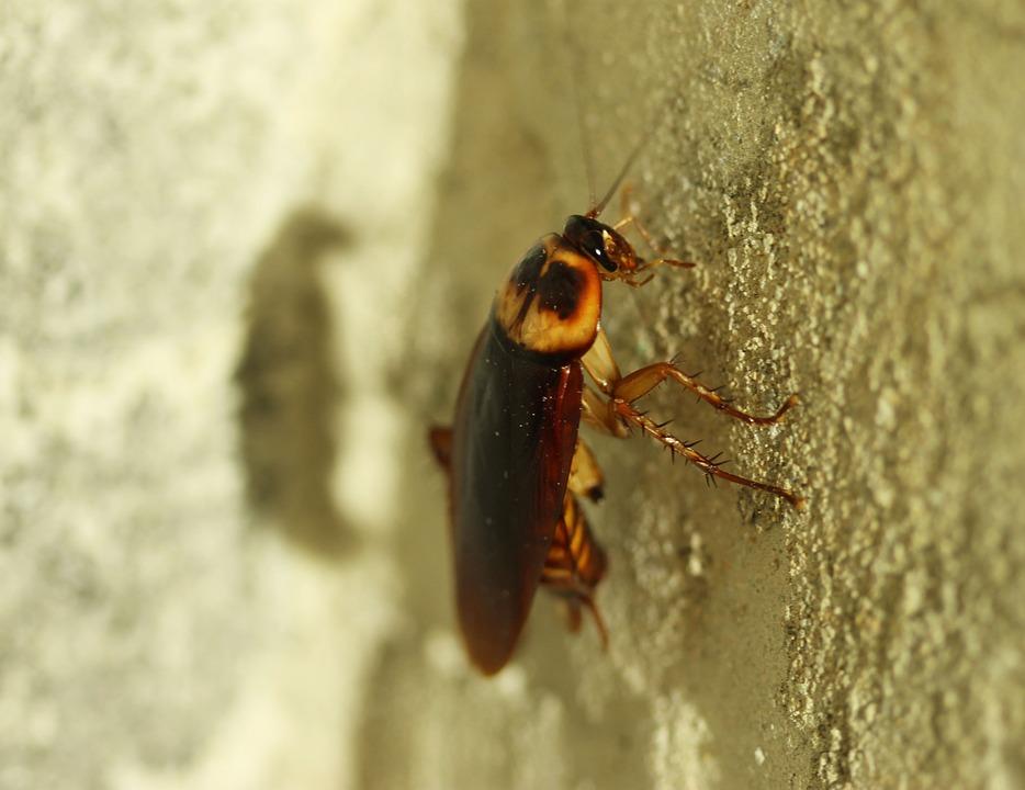 Уничтожение насекомых: клопы, тараканы, блохи, муравьи и т.д.