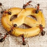 Уничтожение муравьев (в квартире в доме)