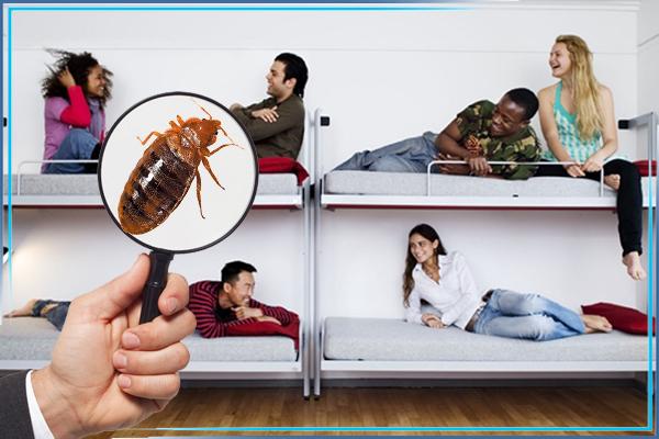 Клопы в гостиницах, общежитиях, хостелах: как избавиться от непрошеных гостей?