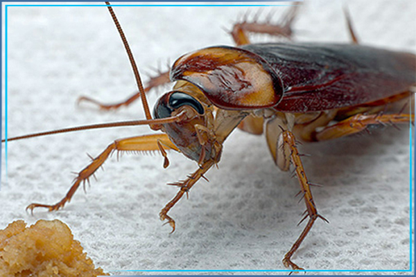 Обработка от тараканов в бытовке