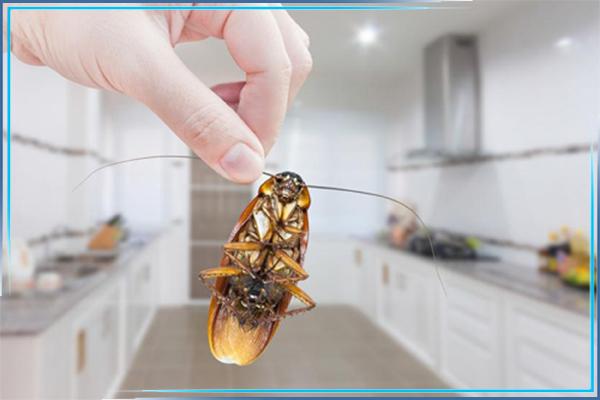 Тараканы и чем они опасны для человека
