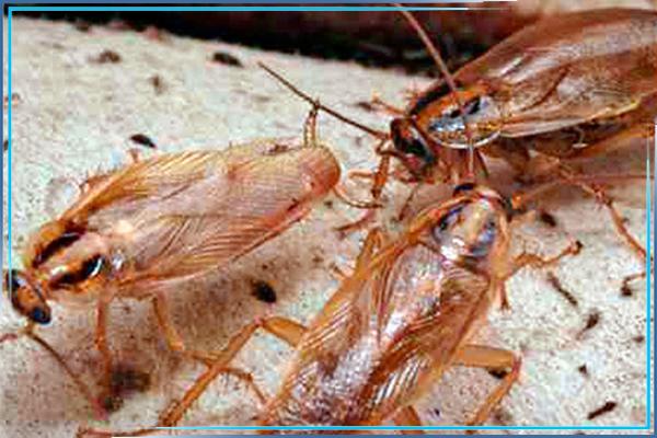 Обработка квартиры от тараканов