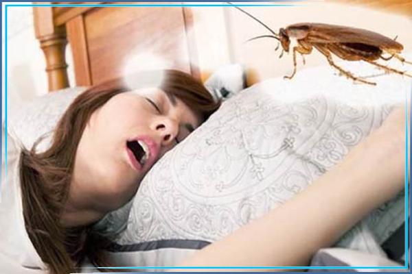 Откуда берутся тараканы в гостинице, в общежитии?