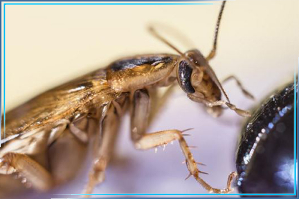 Заказать обработку дома от тараканов