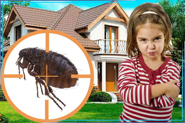 Как избавиться от блох в частном доме или на даче?