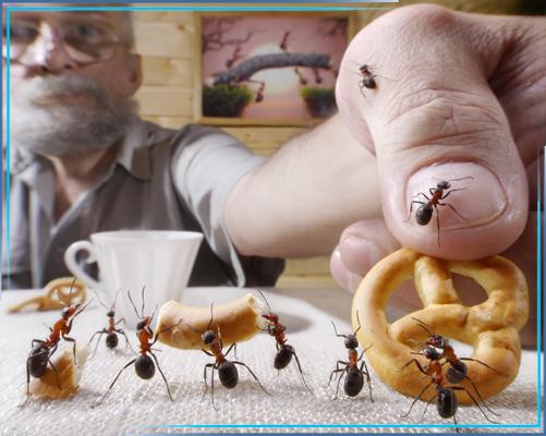 Обработка от муравьев в квартире: как избавиться от рыжих домашних муравьев за один день?