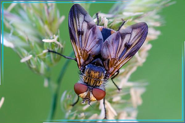Обработка от мух. Уничтожение мух