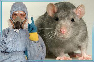 Дезинфектор и крыса