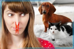 Как избавиться от запаха мочи животных